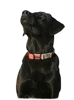 Avery Reversible Dog Collar