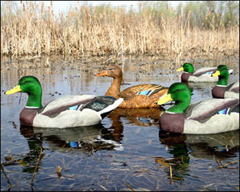 Dakota Decoy X Treme Mallards