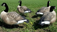 Dakota Fully Flocked Active Goose Decoys