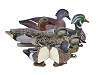 Higdon Decoys Standard Puddle Pack - Foam Filled - 2 Green Wing Teal - 2 Blue Wing Teal - 2 Woodducks