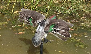 Rapid Flyer Teal